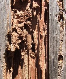 Post construction termite treatment report forms